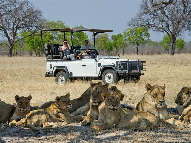 Lions ona game drive