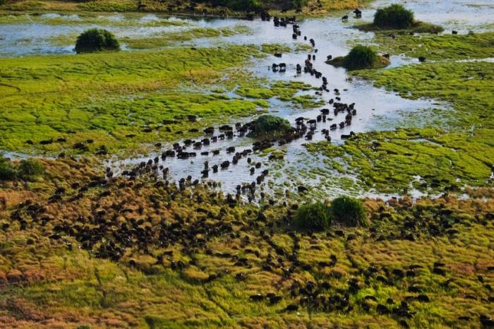 Elephants crossing in the delta