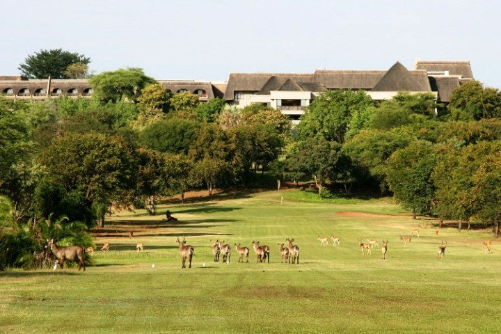 Kudu and waterbuck on the golf course