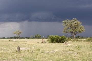 Storms over Hwange