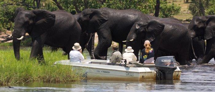 Fantastic wildlife sightings