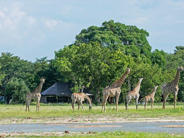 In front of the lodge, animals roam near the water hole