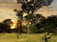 Real African safari at Bomani Tented Lodge in Hwange National Park, Zimbabwe
