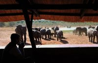 Hwange traffic at Ivory Lodge