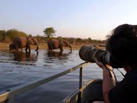 Cruise on Kariba for some spectacular game-viewing