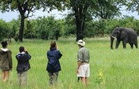 Walking safari in Hwange National Park. Package with Victoria Falls.