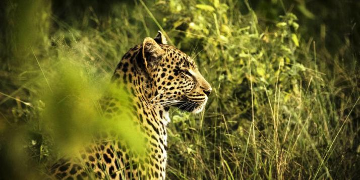 Fantastic wildlife in the Okavango