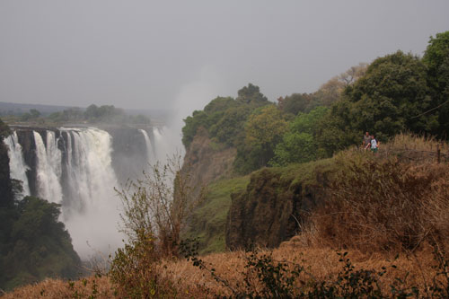 Rainforest of Victoria Falls