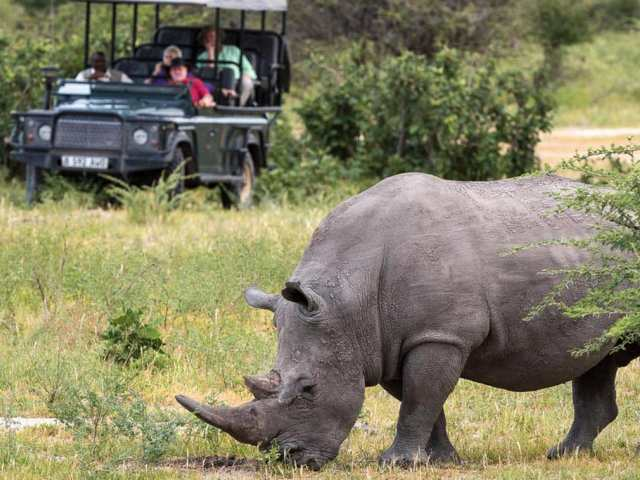 Rhino in Moremi Game Reserve