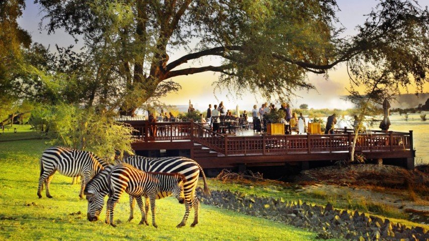 Riverside sun deck with Zebras in the foreground
