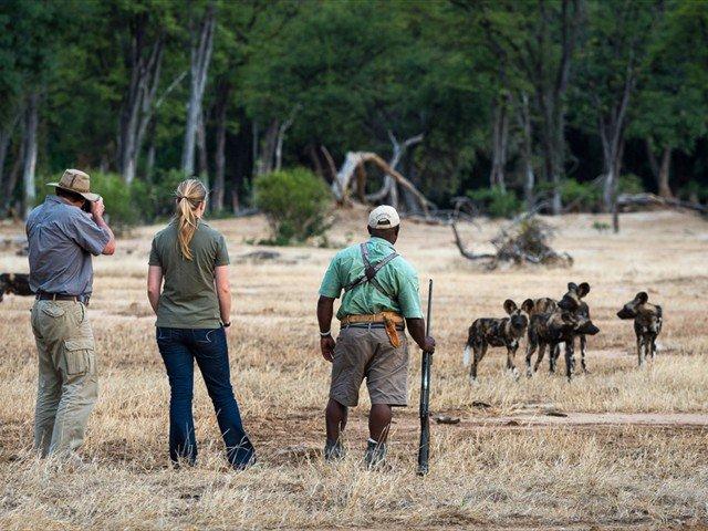 Walking safari at Ruckomechi Camp, Mana Pools