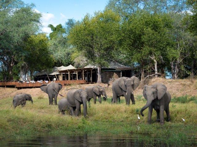Elephants in front of main lodge at Ruckomechi Camp, Mana Pools