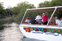 Guests watching elephants on a Shearwater sunset cruise - Victoria Falls