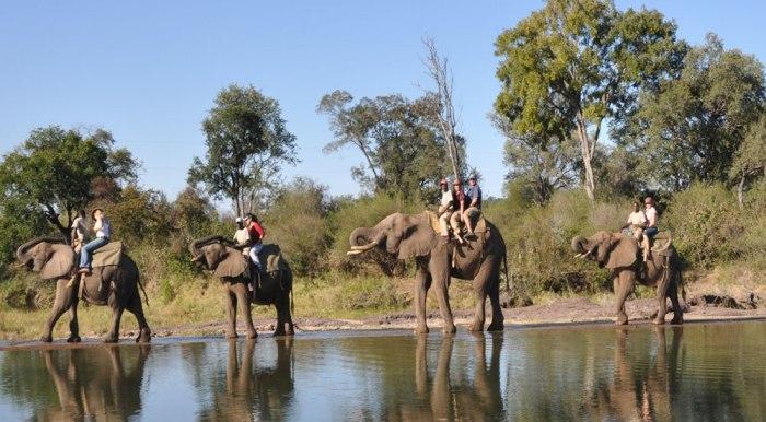 Safari with the bosses