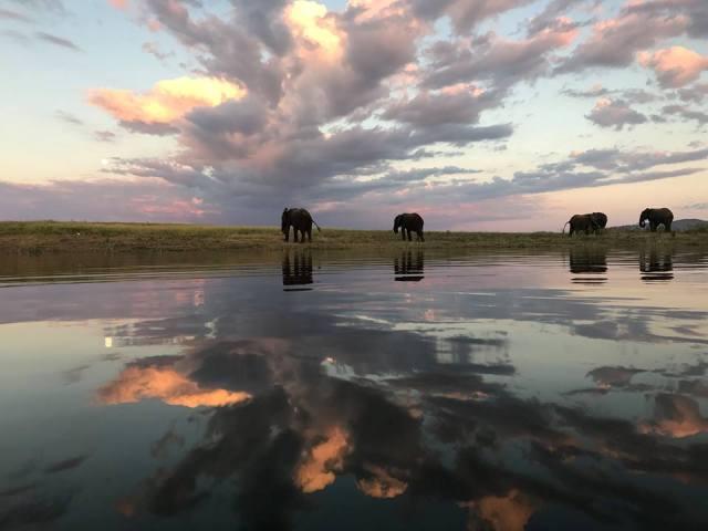 Elephants grazing at Lake Kariba