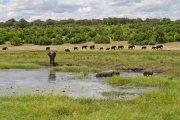 Chobe trip on the Chobe river