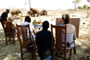Art with the elephants in Victoria Falls