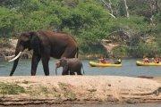 Upper Zambezi River canoe safari