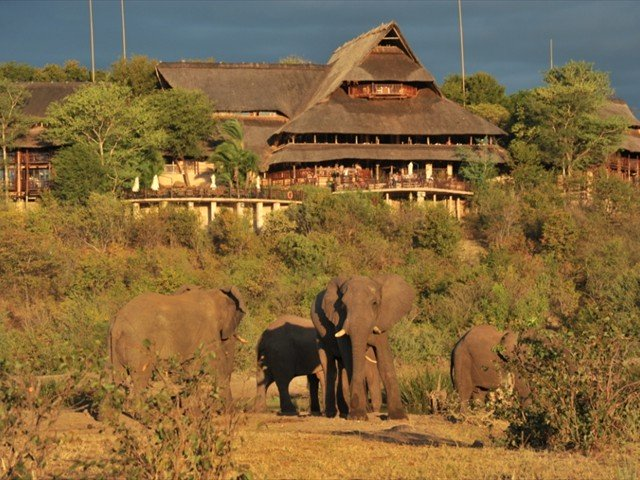 Elephants at the waterhole at Victoria Falls Safari Lodge