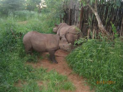 #52 Rhino