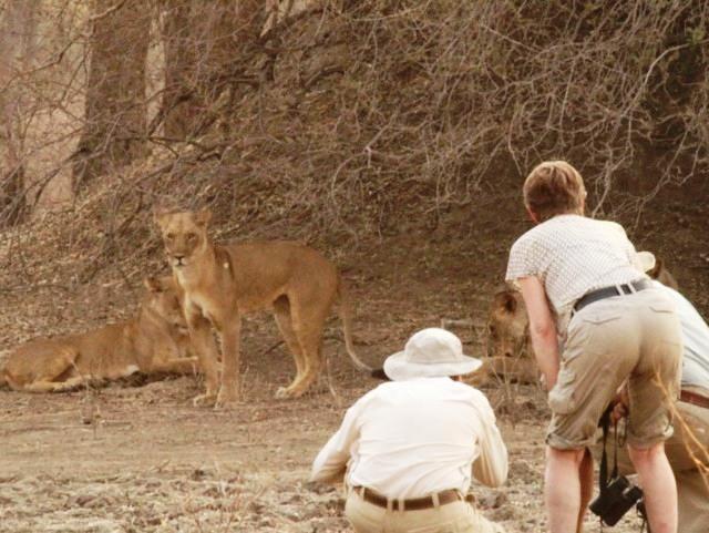 Walking safaris in the dry season in Mana Pools National Park - Zimbabwe