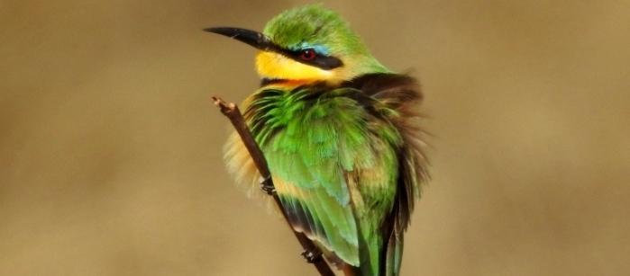 Birding in Zambezi National Park