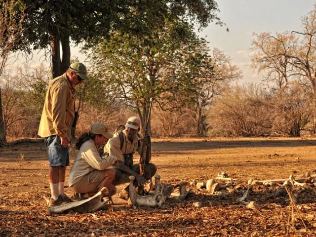 Zambezi Expeditions Camp, Mana Pools, Zimbabwe
