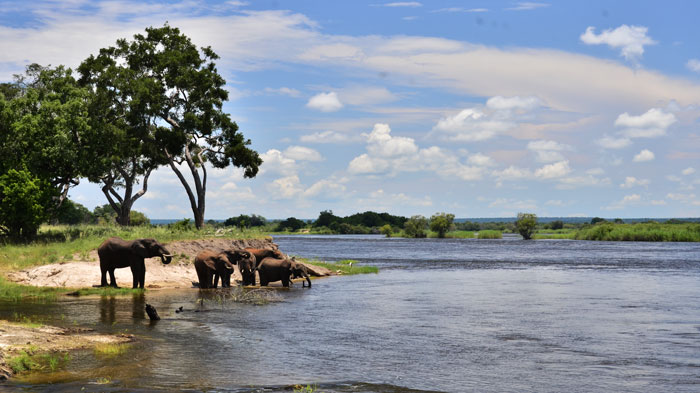 Within Zambezi National Park