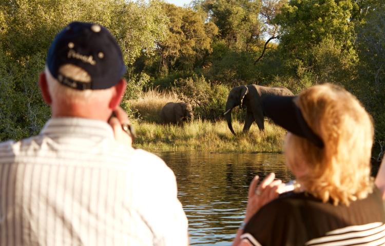 Elephants on the banks of the Zambezi River, seen on a river cruise on the Zambezi Royal - Victoria Falls, Zimbabwe