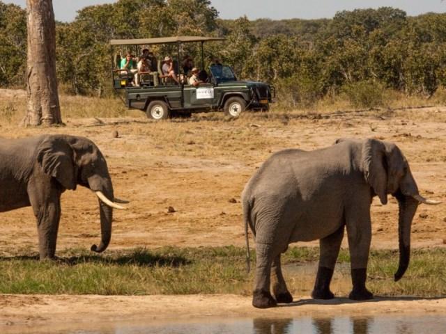 Game drives in the Zambezi National Parks near Victoria Falls, Zimbabwe