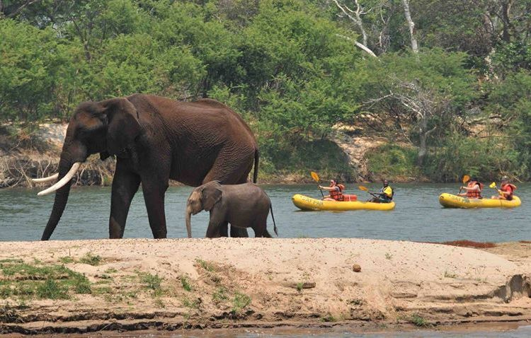 Canoeing on the Zambezi River above Victoria Falls